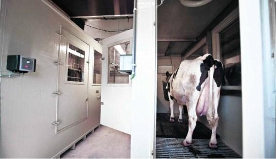 De gasuitwisselingskamers hebben grote vensters zodat de koeien elkaar kunnen zien en zich niet eenzaam voelen.Lisa Van Damme