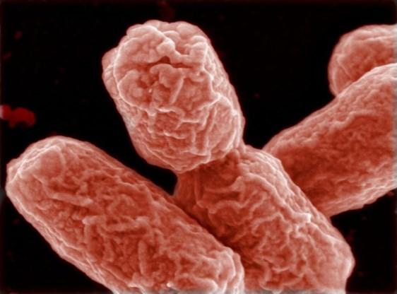 Duitsland en Spanje geven elkaar de schuld van darmbacterie