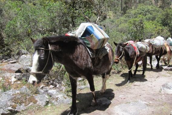 BLOG. De Inca-trail, maar dan zonder toeristen