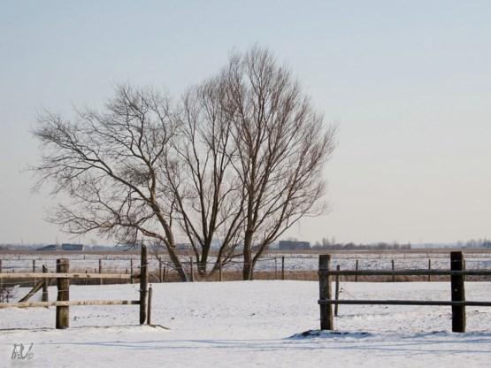 KMI: 'Sneeuw in maart is niet abnormaal'