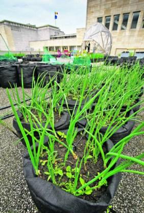 De plantjes groeien in zwarte zakken, gemaakt uit geotextiel.