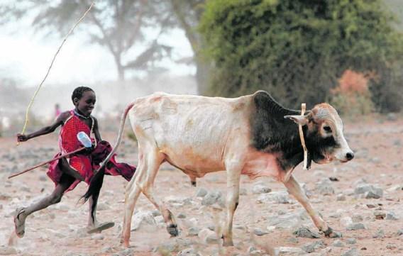 In sommige droge streken, hier in Kenia, groeit nauwelijks iets. Nomadische veeteelt is de enig mogelijke vorm van landbouw.
