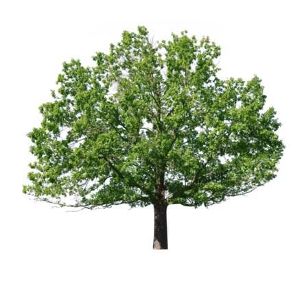 1,5 miljoen nieuwe bomen in Vlaanderen