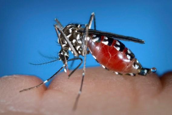 Denguevirus duikt na 85 jaar weer op in Griekenland