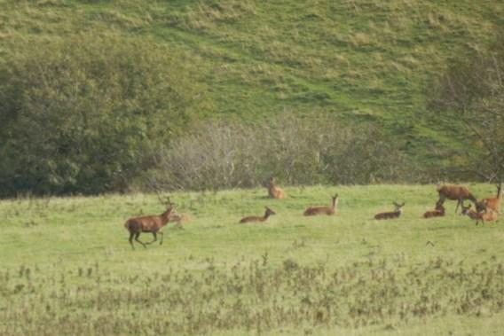 Verenigd Koninkrijk - Bronstig op Exmoor