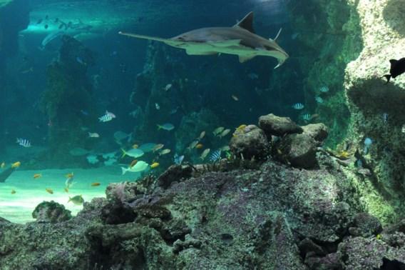 Australië creëert grootste natuurreservaat op zee