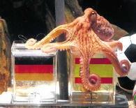 Octopus Paul: hij was niet de enige 'helderziende'.