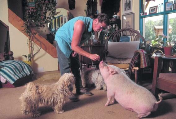 Waarom strelen we honden en eten we varkens?