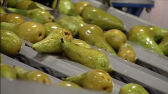 Fruit en groenten bevatten resten van pesticiden