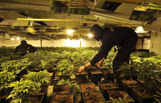 De politie onderzoekt een door Vietnamezen gerunde cannabiskwekerij in het noorden van Tsjechië. Vietnamese criminelen zijn nu ook in België en Nederland actief.
