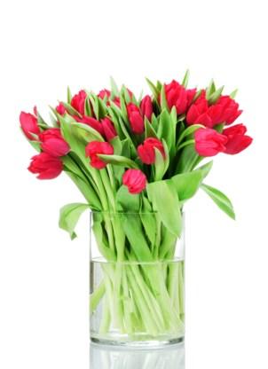 Tulpen Op Vaas.Hoe Komt Het Dat De Stengels Van Tulpen In Een Vaas Doorgroe