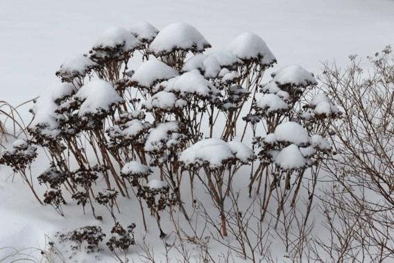 Meer sneeuw op komst