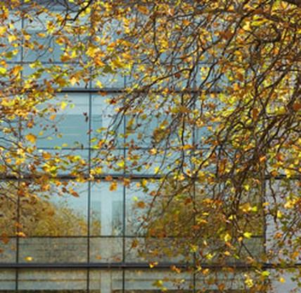 Het geheim tegen stress? Een boom voor je raam