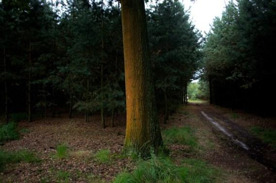 Om de meest waardevolle bossen van kap te kunnen redden heeft minister Schauvliege hulp nodig van haar collega van Ruimtelijke Ordening, Philippe Muytters.