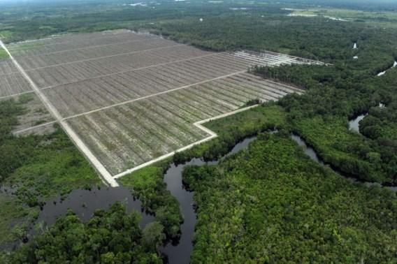 Universiteit Antwerpen: 'Vetzuren uit palmolie slecht voor vruchtbaarheid'