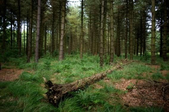 'Ruim 8.200 hectare bos erbij in Vlaanderen sinds 2011'