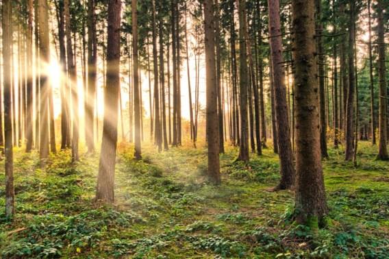 Groen vraagt aandacht voor bescherming bossen