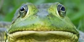 Brulkikker leert biologen een lesje