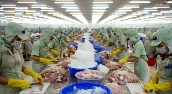 Werknemers staan in lange rijen om de pangasius te verwerken tot wat wij kennen: twee mooie witte filets.