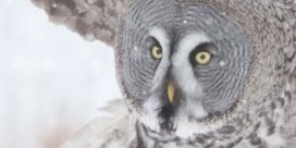 VIDEO. Natuurfoto's worden bewegende beelden