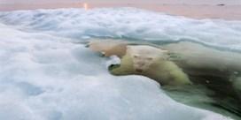 De beste foto's van 2013 volgens National Geographic