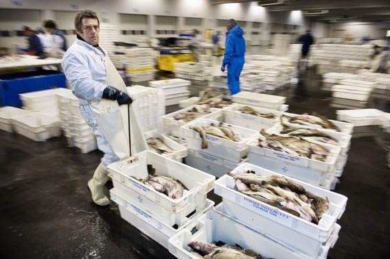 300 ton eetbare vis vernietigd in 2013