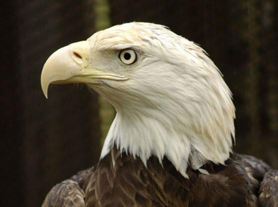 Vier Belgen voor rechter in geval internationale vogelsmokkel