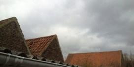 NEPAL - Belgisch massala witloof