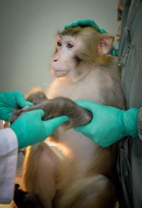 Revolutie in apenonderzoek