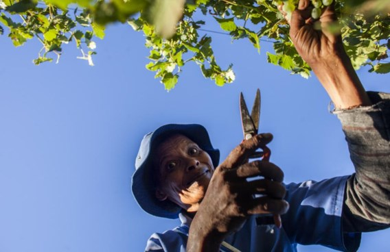 De meeste landen met een overwegend zwarte bevolking zijn te warm en te vochtig om wijn te verbouwen.