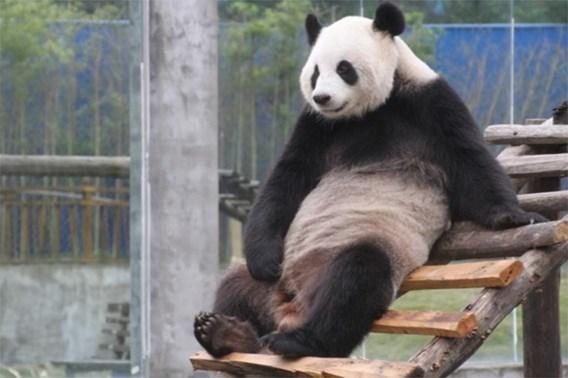 Premier Di Rupo zal panda's verwelkomen