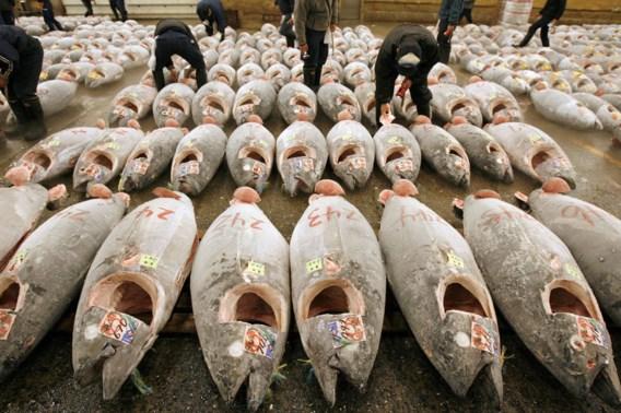 Japan wil vangst van jonge tonijn in Stille Oceaan halveren