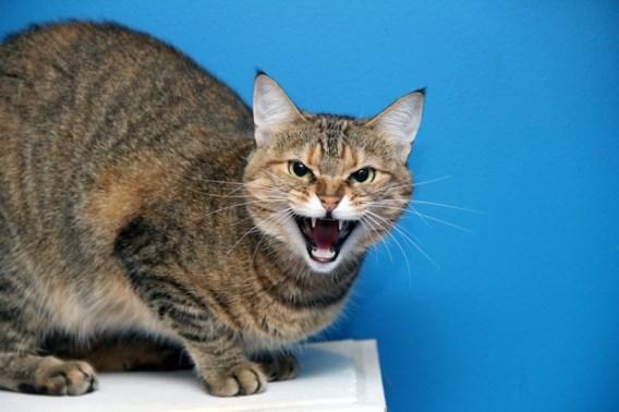 Politie moet gezin redden van agressieve kat