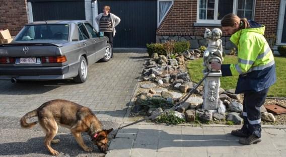 De honden sporen kortsluitingen en storingen beter op dan de beste meetapparatuur.