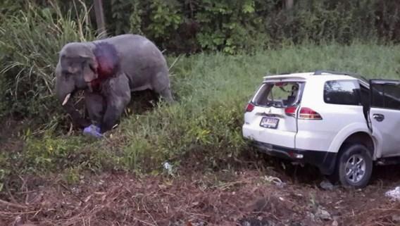Verkeersongeval met overstekende olifant eist zes doden