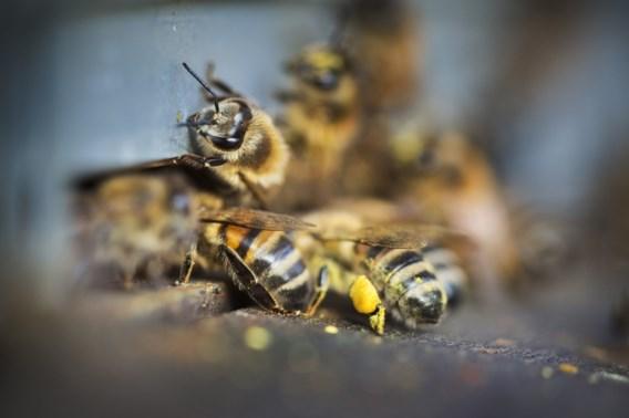 Imkers ongerust over herbicide op gele mosterd