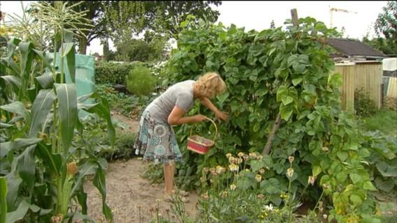 Zelfgekweekte groenten moet u drie keer wassen