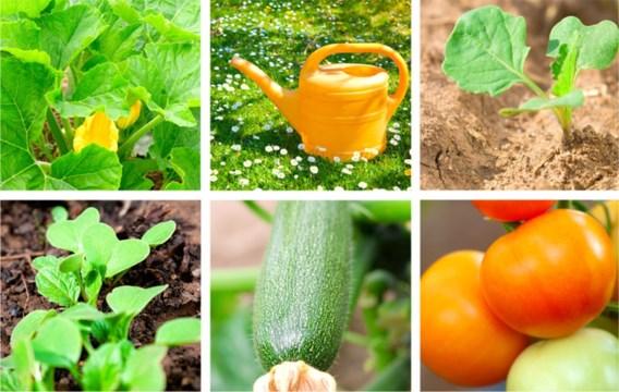 Zelf groenten kweken niet overal even gezond
