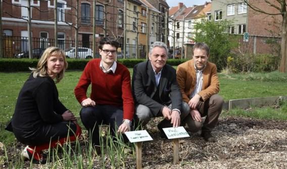 De UGent liet op 35 plaatsen in Gent snijsla kweken en testte de sla in een laboratorium.