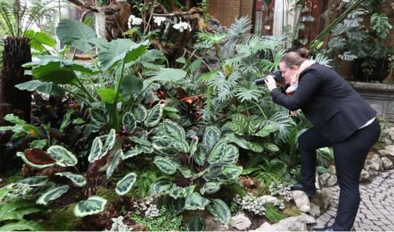 Tegen Pasen ontpoppen zo'n duizend vlinders in de nieuwe vlindertuin van de Zoo.