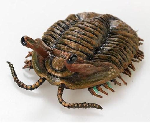 De trilobiet overleefde het niet.
