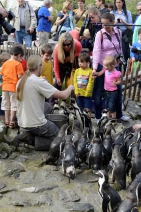 De kinderen mogen de pingui¨ns zelf voederen.