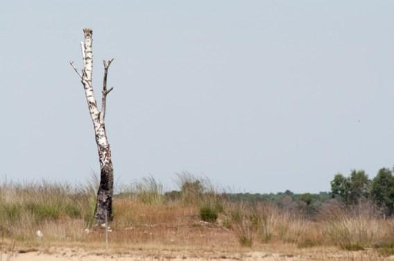 Verhoogd brandgevaar in natuur- en bosgebieden