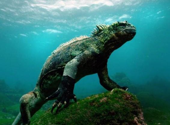De Galapagos-eilanden en David Attenborough: een intrigerende combinatie.