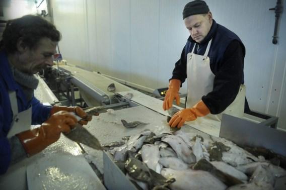 Vis wordt economisch steeds belangrijker