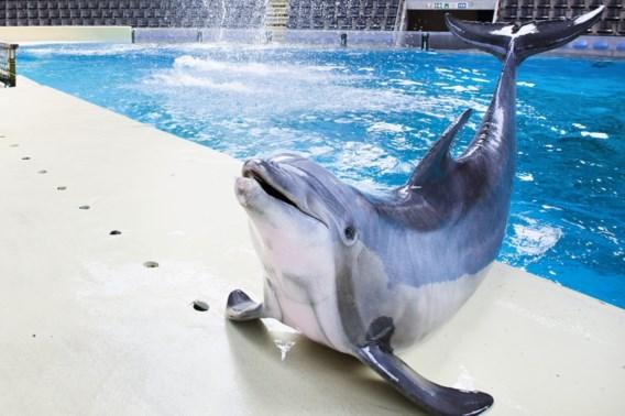 Zes gewonden tijdens dolfijnenshow in Boudewijn Seapark