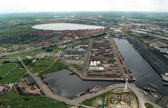 Japanse kruiskwal duikt op in Oostende