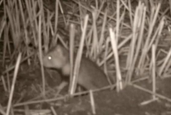Hamsters zijn typische nachtdieren.