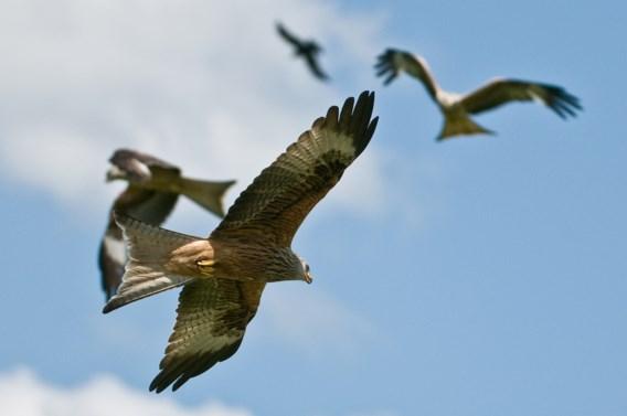 Europese vogelkijkers tellen dit weekend trekvogels