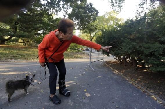 Dood berenjong in Central Park door wagen aangereden